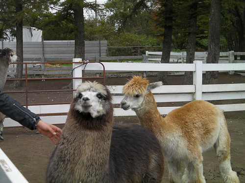 Alpaca Touring Vol.2(October.24-25.2009)