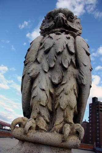 Owl 006