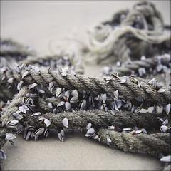 beach rope and shells (sue.h) Tags: 6x6 film beach mediumformat australia 120film newsouthwales yashicamat iluka yashicamatem fujicolorpro160c closeuplensno2