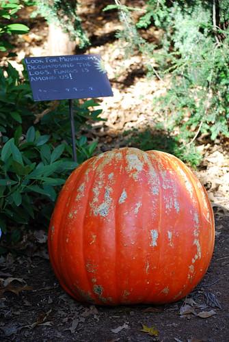 365_Pumpkin[2009]