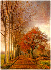 Autumn Line (Jean-Michel Priaux) Tags: road autumn trees sunset shadow red orange sun france tree art texture nature sunshine illustration photoshop automne painting way landscape rouge nikon shadows perspective dream ombre line peinture dreaming route arbres alsace paysage arbre soe hdr anotherworld alignment alignement mattepainting ried d90 priaux abigfave sermersheim vosplusbellesphotos kogenheim