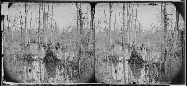 Swamps near the Appomattox River from which the Confederates were driven at the point of the bayonet by The US National Archives