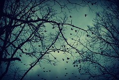 Crows (~Virginia Vast~) Tags: pictures blue autumn trees light sky storm black tree leaves birds silhouette photoshop virginia oak branches alabama bluesky crows deadwood underexposure pellcity photoshopcs3 backyardshoot