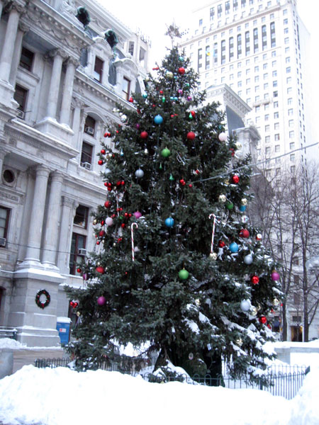 City Hall Christmas Tree (Click to enlarge)