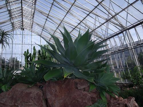 20090919 Edinburgh 20 Royal Botanic Garden 187