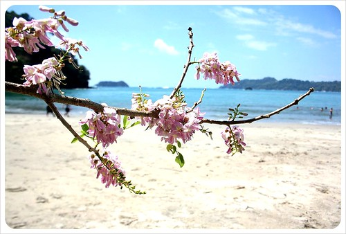 Manuel Antonio Flower at the beach