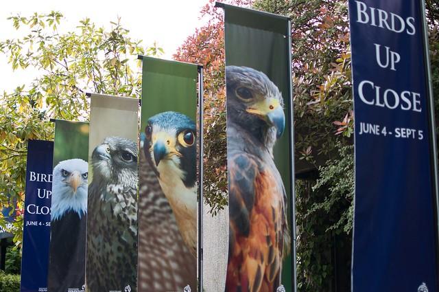 Birds up close