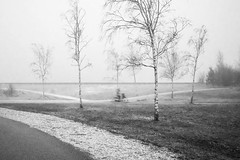 Passing the grey area (MarxschisM) Tags: bw park outdoors netherlands winter grey fog trees cyclist