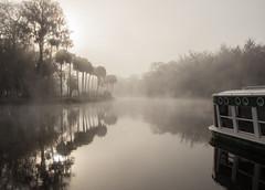 Foggy morning on the Silver River (William Miller 21) Tags: silverspringsstatepark river palms glassbottomboat florida landscape nature canon t3i tamron1750