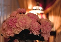 ~ من عـــيوني يا حـــبيبي (eL reEem eL sro0o7e ♥) Tags: pink flowers flower photography 50mm ورود ♥ ورد وردي elreeemelsrooo7e