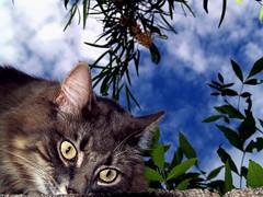 Marley Over the Wall (joecrowaz) Tags: arizona cats pets nature animals supershot kissablekat bestofcats colorphotoaward kittyschoice catmoments oscarsurrealleous
