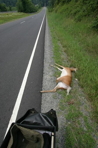 Poor Bambi!