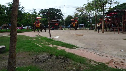 象キャンプ