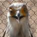 2009.172 . Secretary Bird