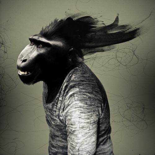 Macaco #4