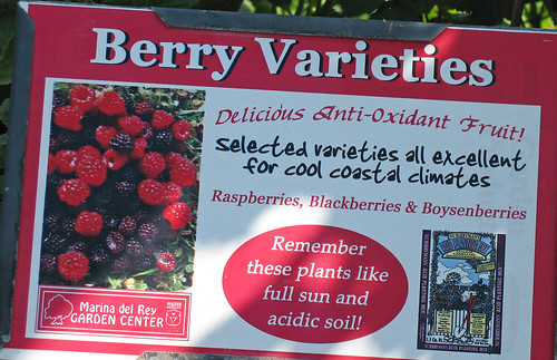 berries anit-oxident fruit