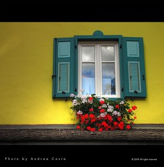 window in yellow
