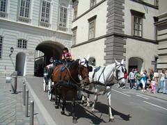 Coches de caballos en Viena Austria 03 (Rafael Gomez - http://micamara.es) Tags: vienna wien horses en horse car de caballo caballos austria sterreich viajes viena coches carriages    carruajes   autokutschen