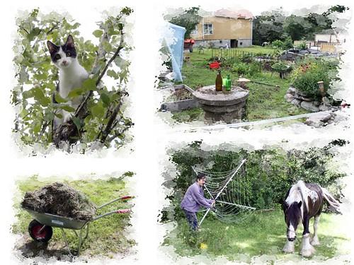 I trädgården