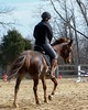 Canter (odkaty) Tags: anzia february09