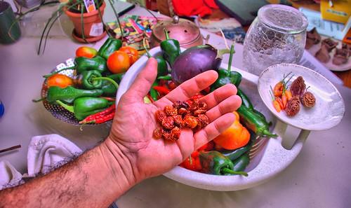 Sun-Dried Tomatas