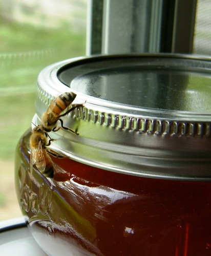Trying to get to the honey