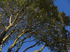 (LeYgE) Tags: travel blue trees tree verde green tourism nature azul digital garden photography scotland europa europe flickr foto glasgow parks scottish fotografia arvores rvore rvores kelvingrovepark fujifilmfinepixs5500