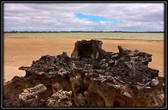 CapOne IMG_1505 (Un-Alien-able) Tags: trees death australia drought riverland barmera salinity ef24105mmf4lisusm lakebonney ansellwannabe
