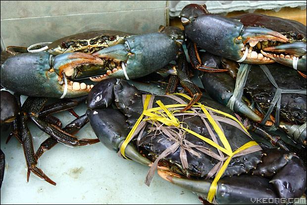 sri-lankan-crab