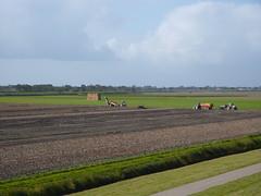 de laatste oogst (blackcharliepho) Tags: pointandshoot dijk noordgroningen kwelder