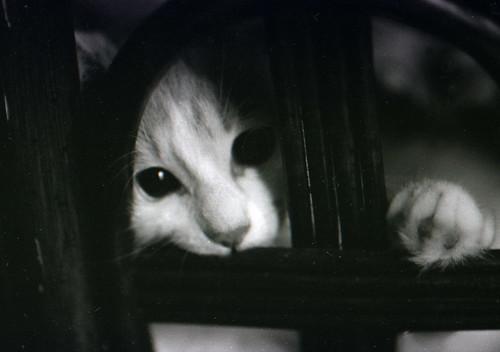 フリー画像| 動物写真| 哺乳類| ネコ科| 猫/ネコ| 子猫| モノクロ写真| 覗く/見る|    フリー素材|
