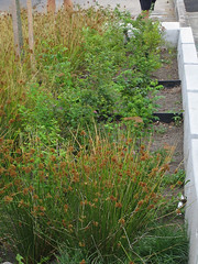 green infrastructure on 92d Ave in Portland (by: Transportation Enhancements Clearinghouse)