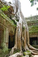 Ta Prohm (Movie 'Tomb Raider' Temple) - Siem Reap, Cambodia (waynedunlap) Tags: world travel movie temple cambodia escape tomb plan your siem reap now ta rader raider gurus unhook probm unhooknow