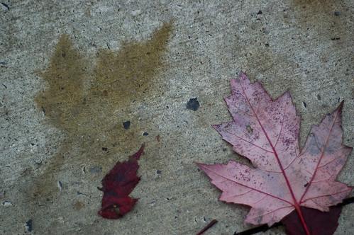 283:365 Shadow-leaves on the sidewalk