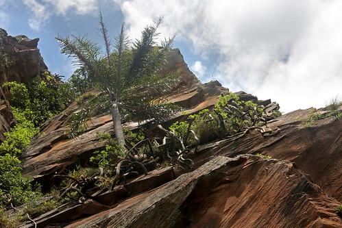 analandia climbing cuscuzeiro escalada sport rocks sky tree vegetation