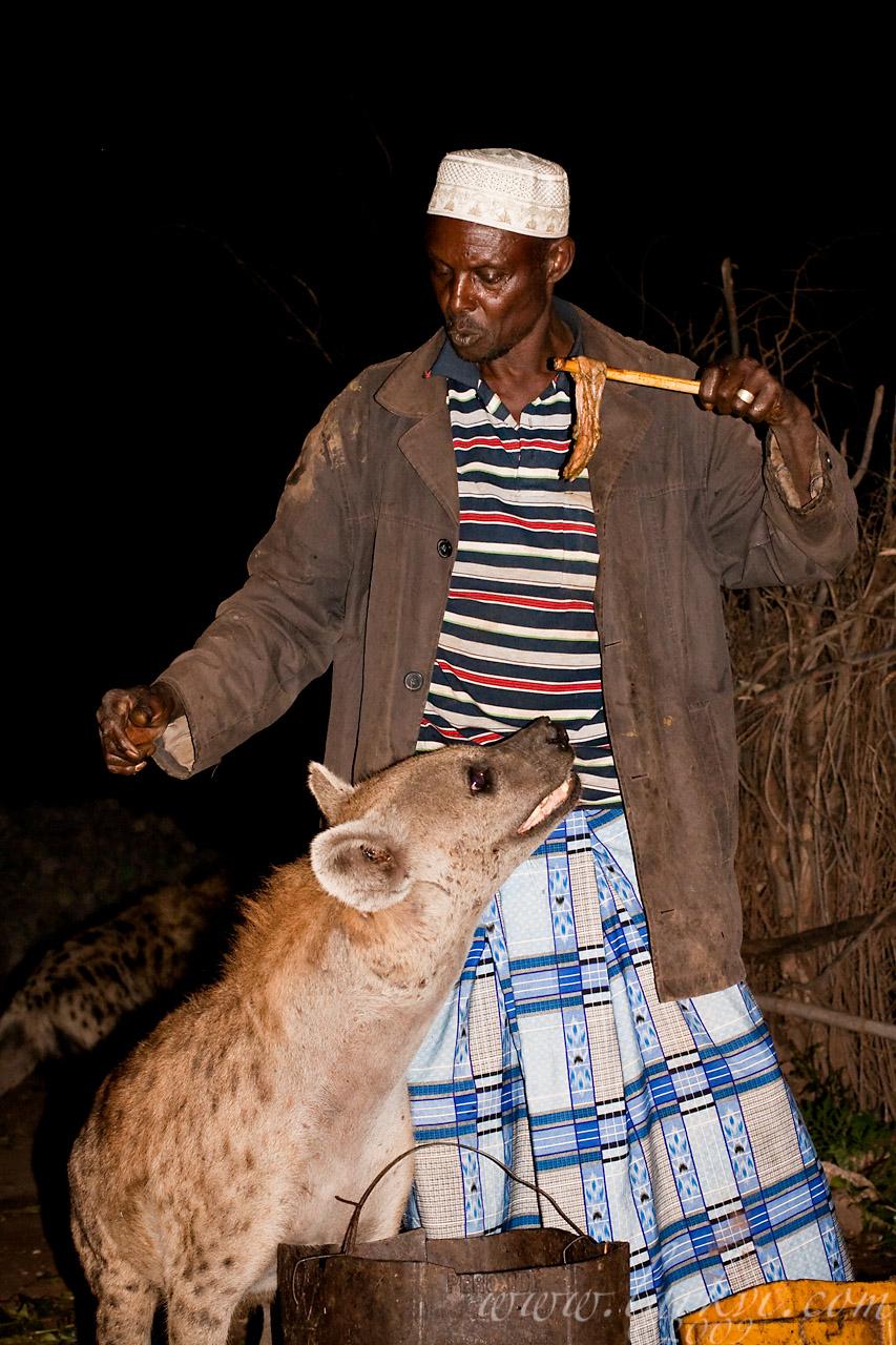 Hyena Feeding #1, Harar, Ethiopia, 2009