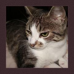 Doce Olvia... (flores do meu jardim((mostly off))) Tags: pet cats cat gato gata gatas petportraits abigfave specialpetportraits