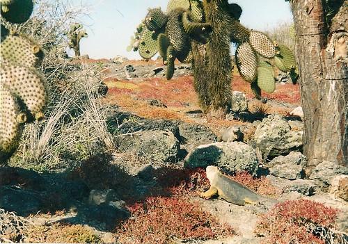 Galapagos- South Plaza (2)