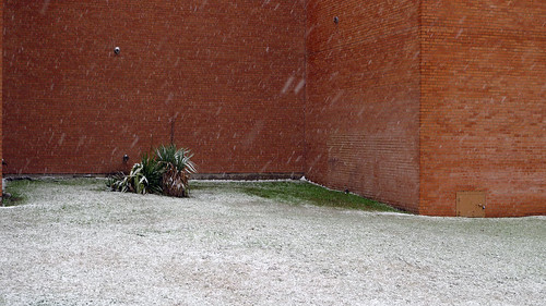 yucca snow