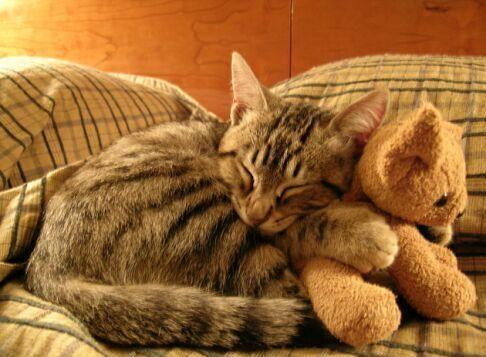 kittyhughug