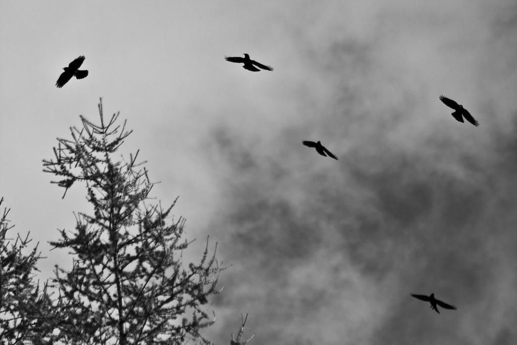 Crows #3