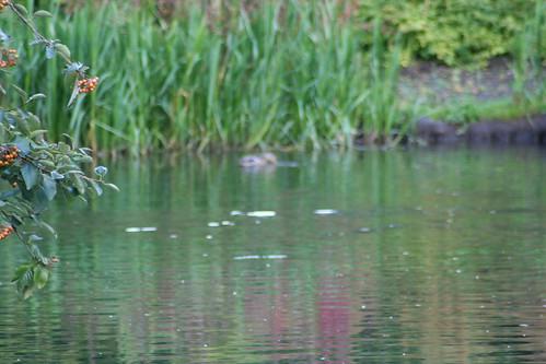 20090919 Edinburgh 20 Royal Botanic Garden 457