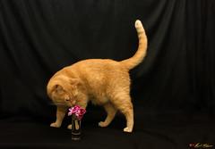 Corazn de Poeta (miguel salguero) Tags: cats flower texture textura look animals fauna cat feline emotion flor digitalart gatos gato felino animales mirada artedigital emocin canoneos450d miguelsalguero