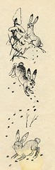 pii 12 (vaula) Tags: old bw rabbit bunny illustration vintage book hare 1962 kuvitus jnis