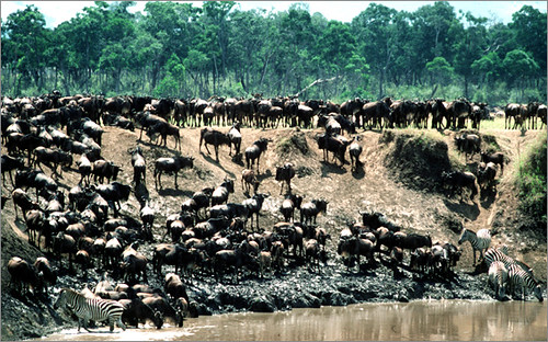 Great Wildebeest Migration safari in Kenya and Tanzania