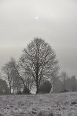 Sunrise through morning fog (wiedenmann.markus) Tags: sunrise sun fog ostalb heidenheim germany tree nature oputdoor winter season cold morning