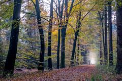 Autumn walk in the forest (Maarten Takens) Tags: herfst2016 forest bos herfst herbst kleuren montferland nederland gelderland