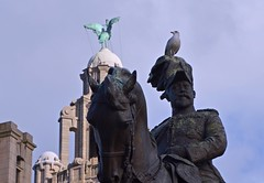 King Edward VII and his young seagull. (rustyruth1959) Tags: nikon nikond3200 tamron16300mm merseyside liverpool pierhead city outdoor bronze statue horse animal bird king gull seagull edwardvii copper royalliverbuilding liverbird tower clocktower architecture building dome stonework sky beak patina
