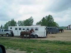 horse trailer, goose neck trailer, horse trailer for sale