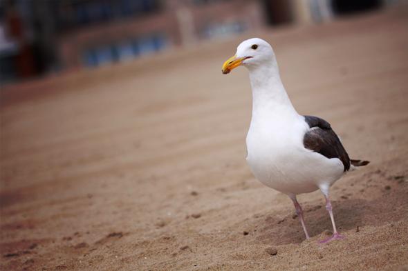 071009_beach07